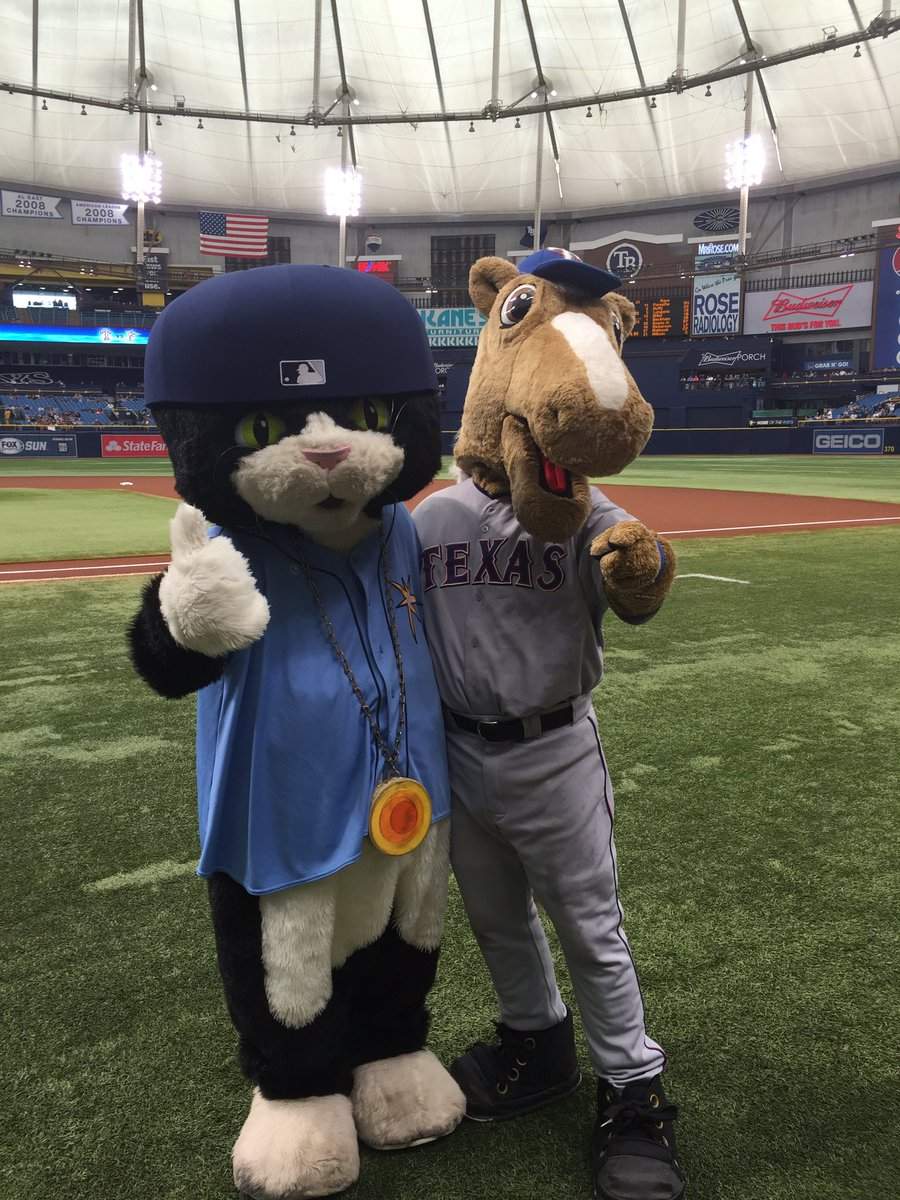 Image result for dj kitty tampa bay rays