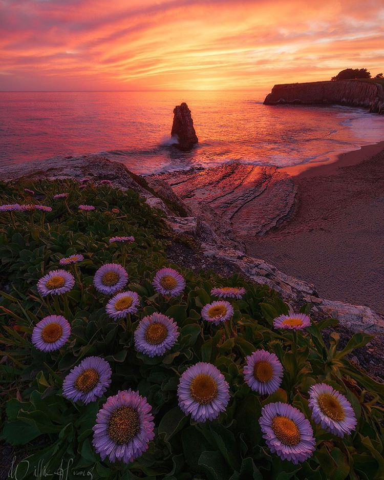 A sunset leaves behind fiery pink and orange hues in the sky and ocean at Davenport Beach.