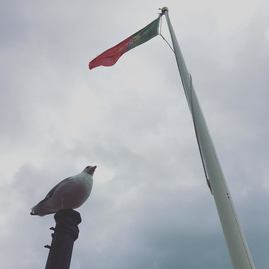 For seagull and country https://t.co/Wf3cVGramK https://t.co/03Lt9l1eB8