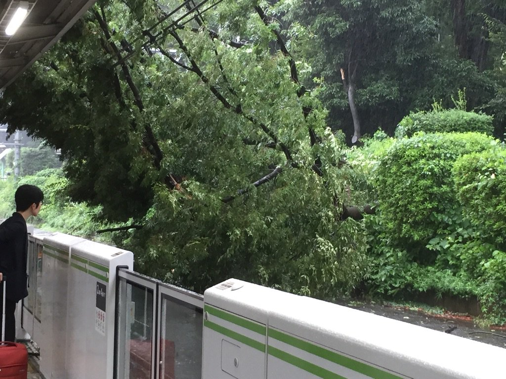 原宿で木が倒れてきた。外回り止まるぽい。 https://t.co/pdJpWurjoC