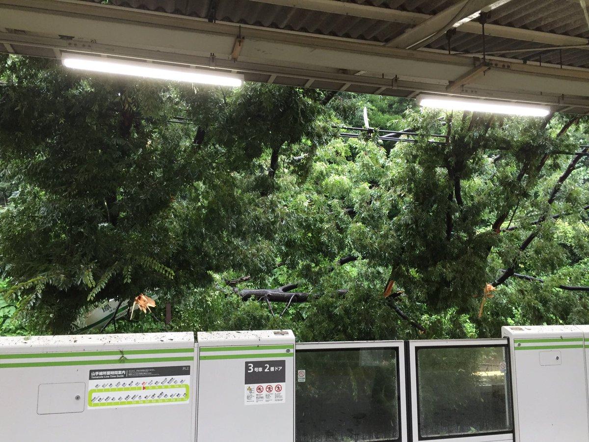 倒木 横浜 線