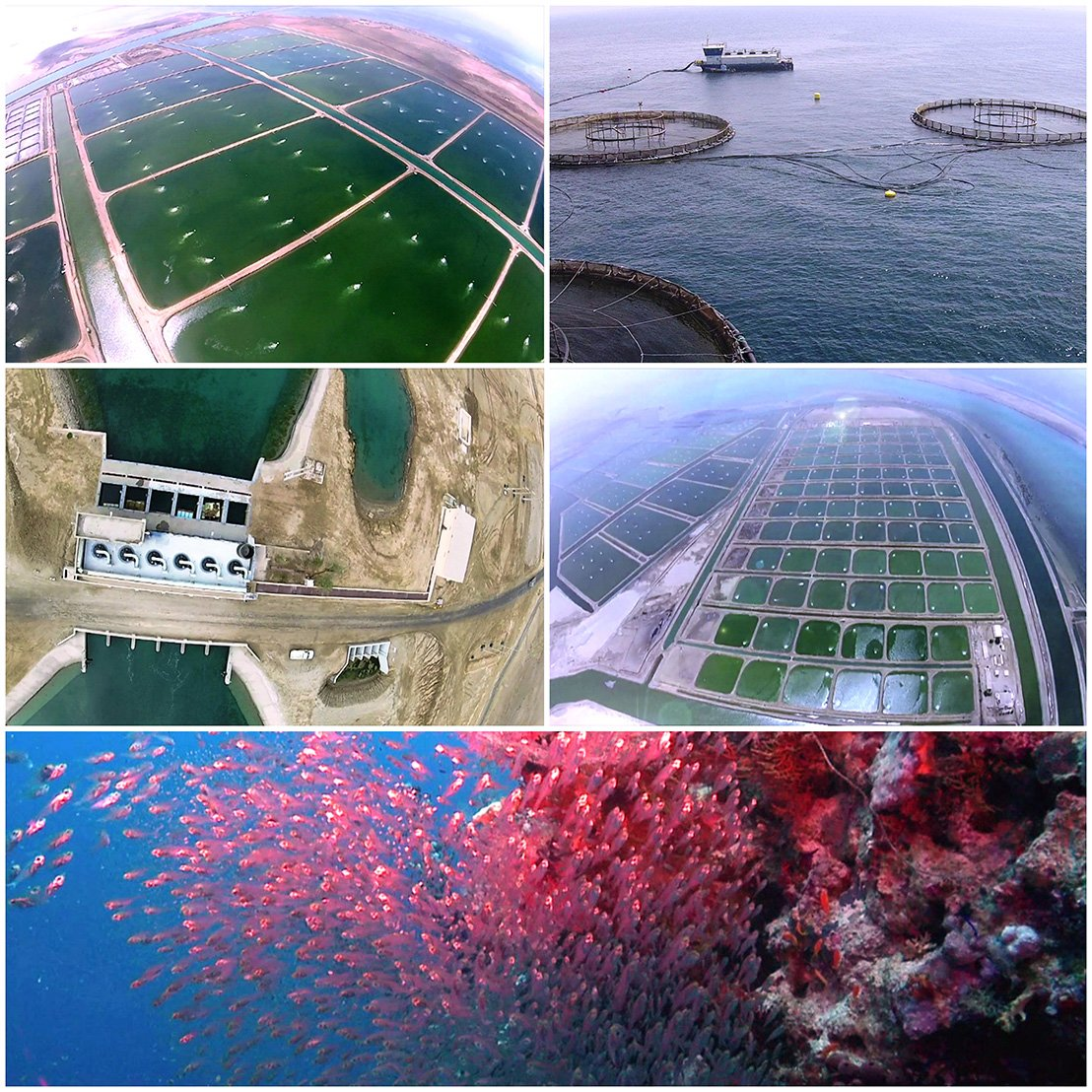 the objectives of shrimp farming 100 percent the chances of crop failure increase with increasing intensity because of higher stock- ing densities, more dependence on technology, and the pressure on water quality exerted by the culture species (stickney 1994) intensive culture intensive shrimp culture aims for extremely high production rates (5,000.
