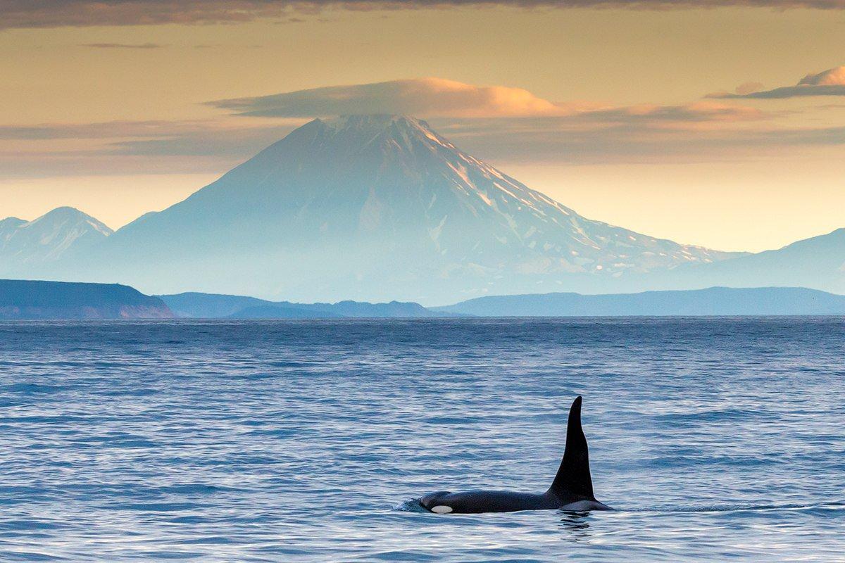 фото камчатка тихий океан