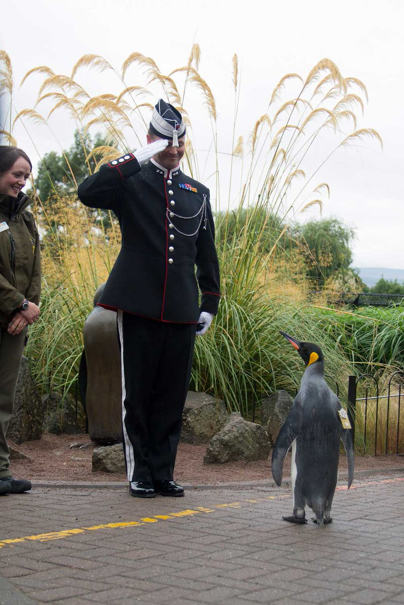 Saluting the penguin