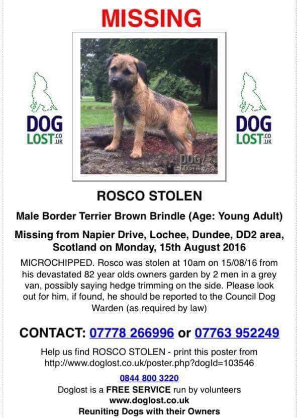 RT @janfairfield03: @jamesmartinchef Could u pls RT to spread awareness & bring this little guy home? Thank you 🐕 https://t.co/nynVqbuey7