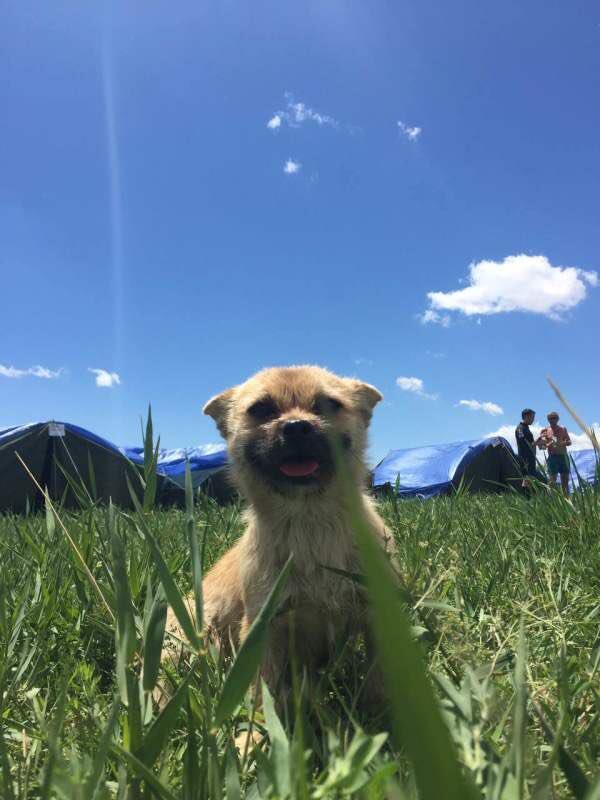 Ultramarathon runner Dion Leonard finally reunited with Gobi the dog after sharing 80-mile China desert trek CqhmPq0WgAAZIgu