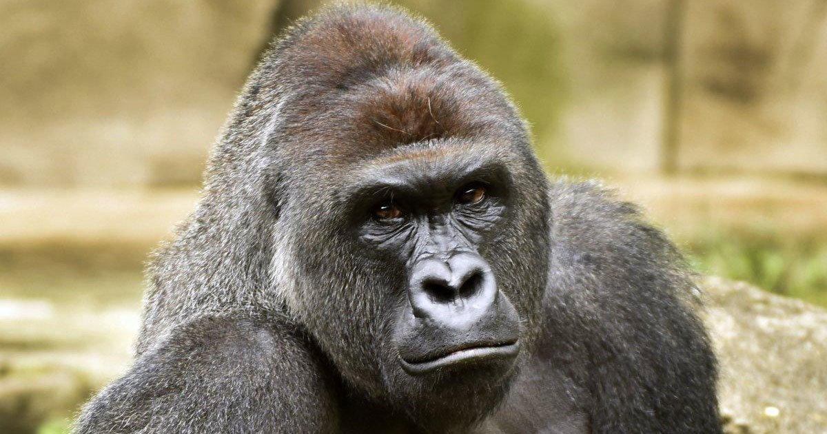 Cincinnati Zoo deletes Twitter account after harassment — 'just like they deleted Harambe' https://t.co/iweApO2K8z