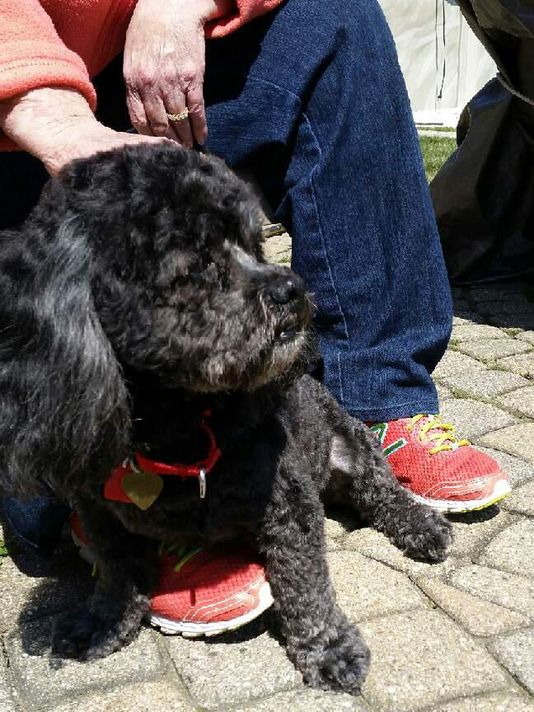 Family pet's death at Shelby Township groomer sparks legal action