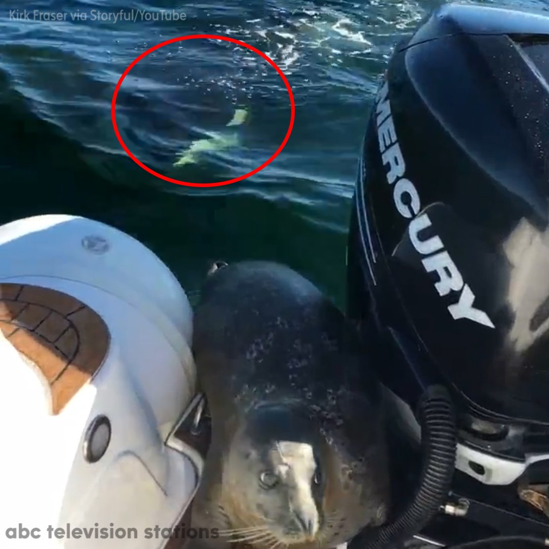Baby Seal Jumps on Boat to Avoid Killer Whales | Baaz
