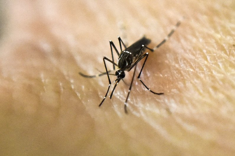 Why Colorado's mosquitoes are not likely to spread Zika