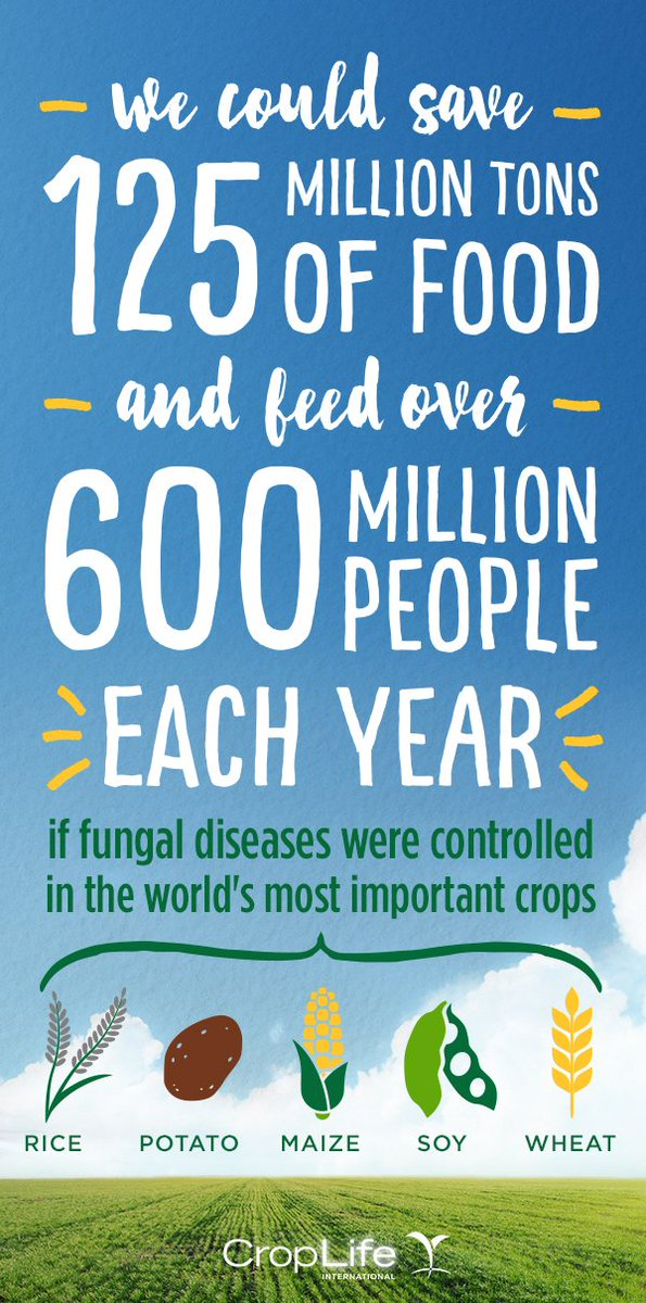 Why are fungal diseases so bad? Look at how much food we lose and people it could feed. https://t.co/afbfBgnPgi