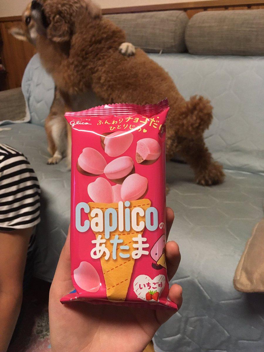 [犬]これ買ったんですけどこれ食べたら普通のカプリコ食いたくなります(後ろで取っ組み合ってる犬は気にしないでください)[]