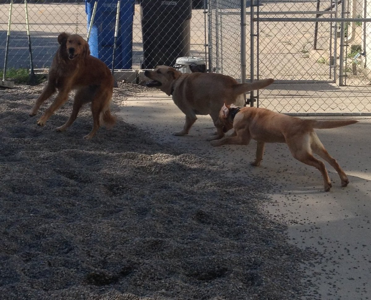 Maggie Mae, Gryffin, and Kip have a blast!