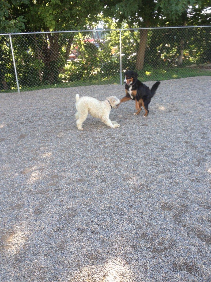 Radar and Zooey dance around!