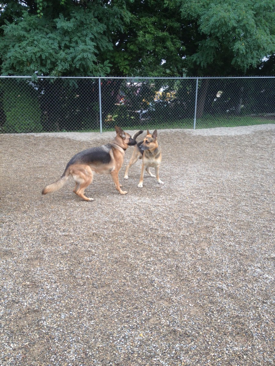 Chip and Raven get ready to play