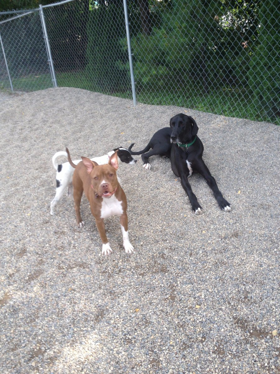 Charlotte, Pepper, and Zeus all hang out!