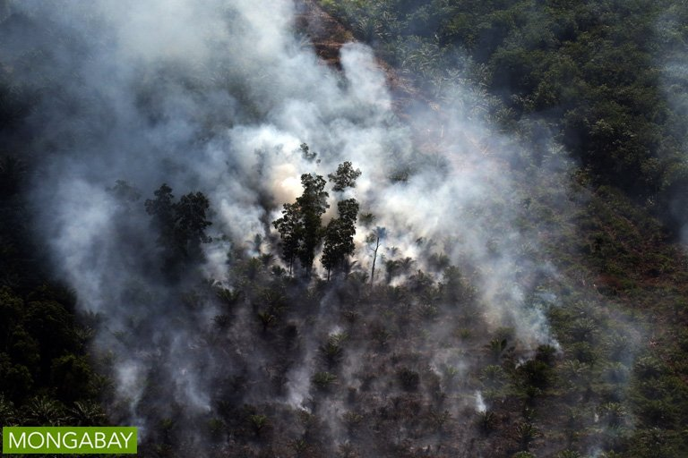 RT @mongabay Indonesian parliament to investigate 15 companies alleged to be complicit in fires in Riau: https://t.co/so9bMSZ0Yy