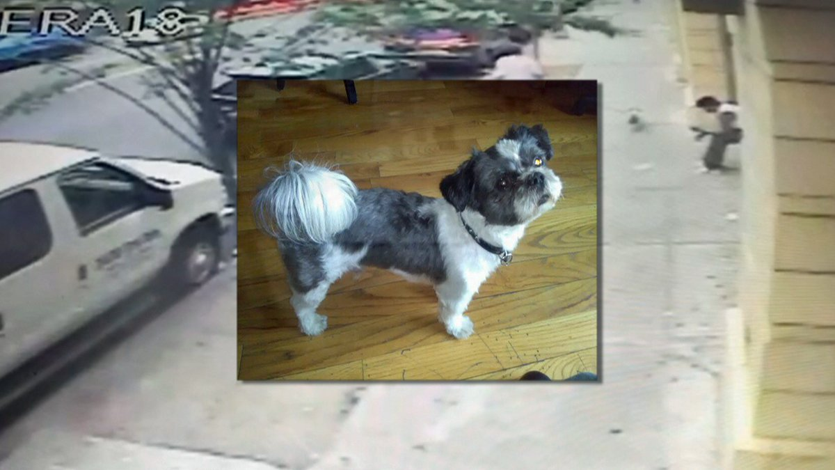 Veteran's stolen service dog found outside supermarket where it was taken: NYPD