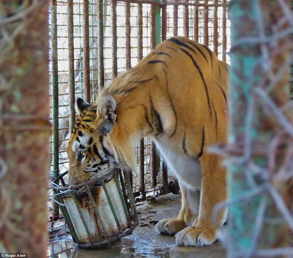 Animals Living In Hellhole Zoo In Gaza Finally Rescued