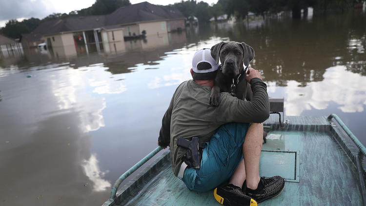 @PAWSChicago heads to flood-ravaged Louisiana to help rescue animals, find them homes