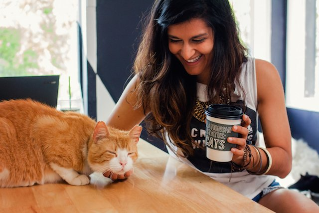 Los Angeles' First Cat Cafe Has An Official Opening Date