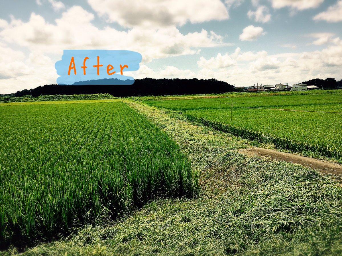 """あいべ福島プロジェクト On Twitter: """"あいべin鏡石 2日目(*^^*) 今日は、田んぼの草刈りのお"""