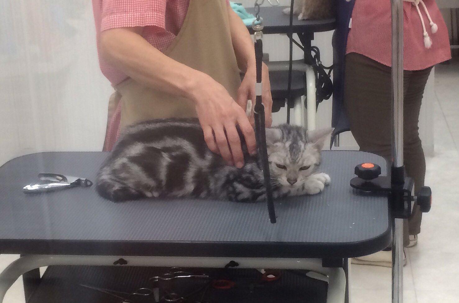 あなたのためなのにww愛猫を爪切りに連れて行ったら強烈に睨まれたww