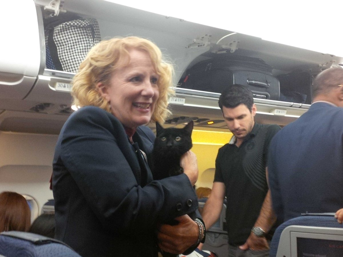 Stowaway Cat Found Under Plane Seat