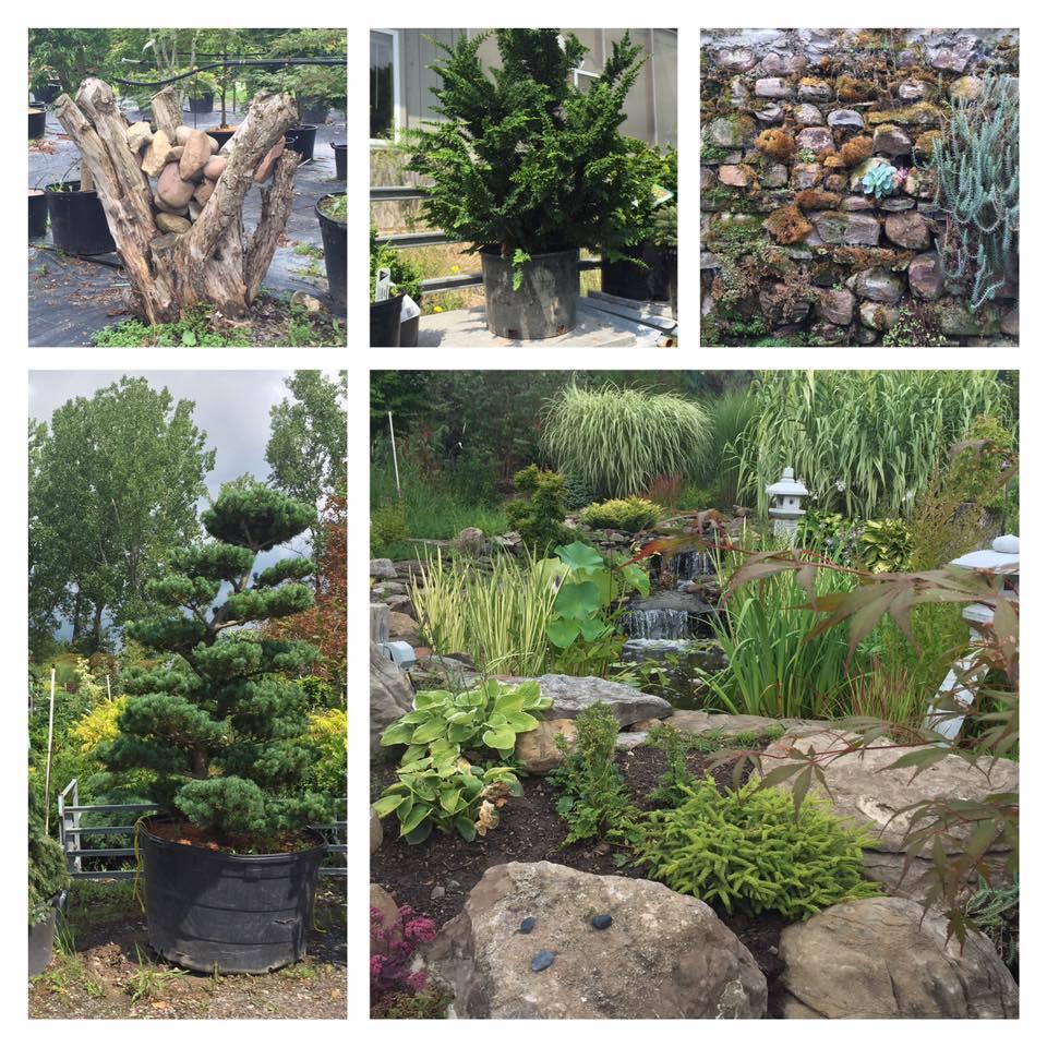 oriental garden (@gardenrochester)   twitter