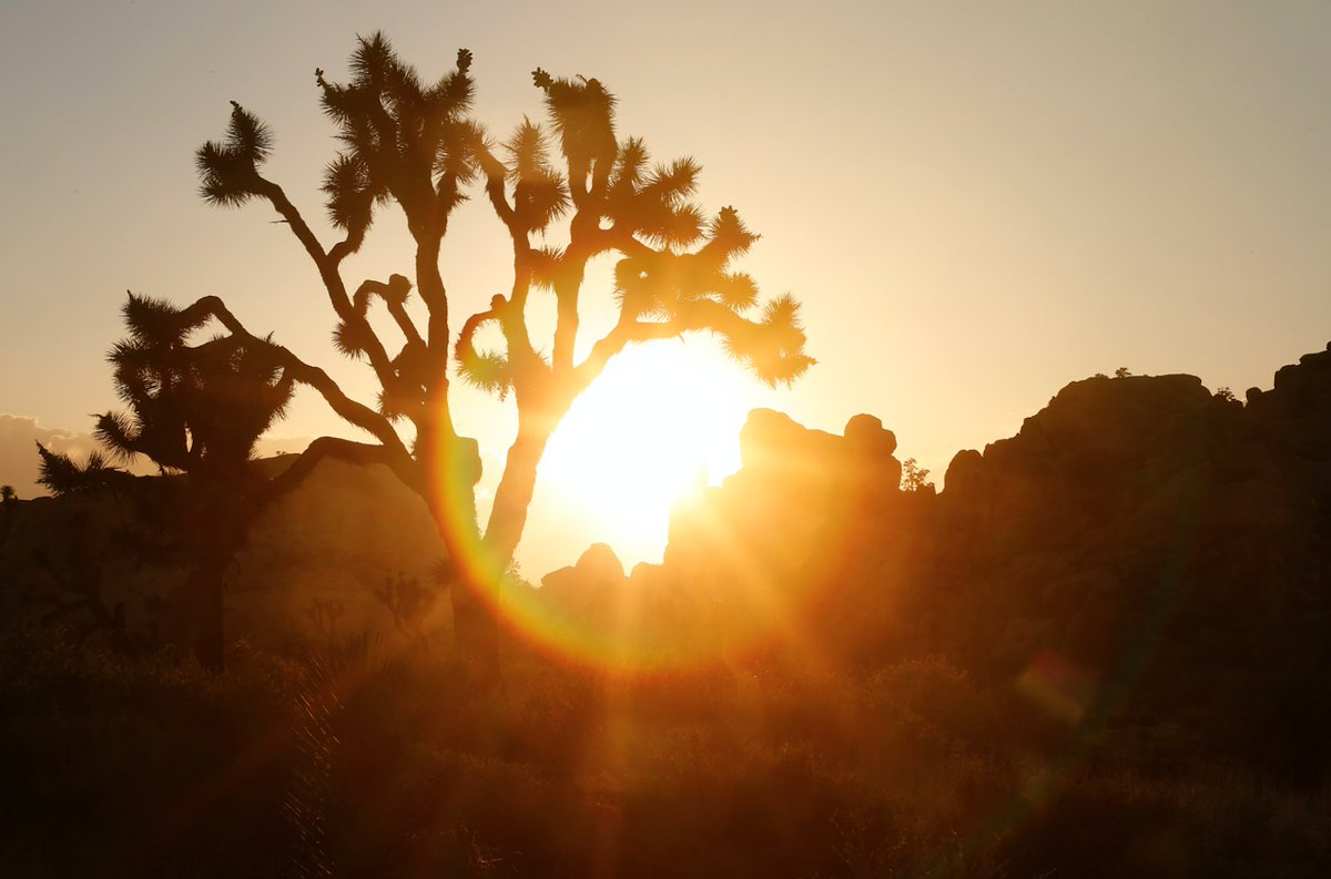In honor of NPS100, try discovering (or rediscovering) our desert national parks