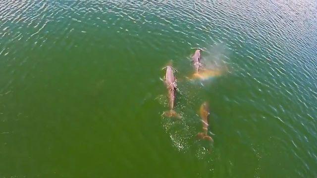 Dolphin blows rainbow near Ft. Desoto.