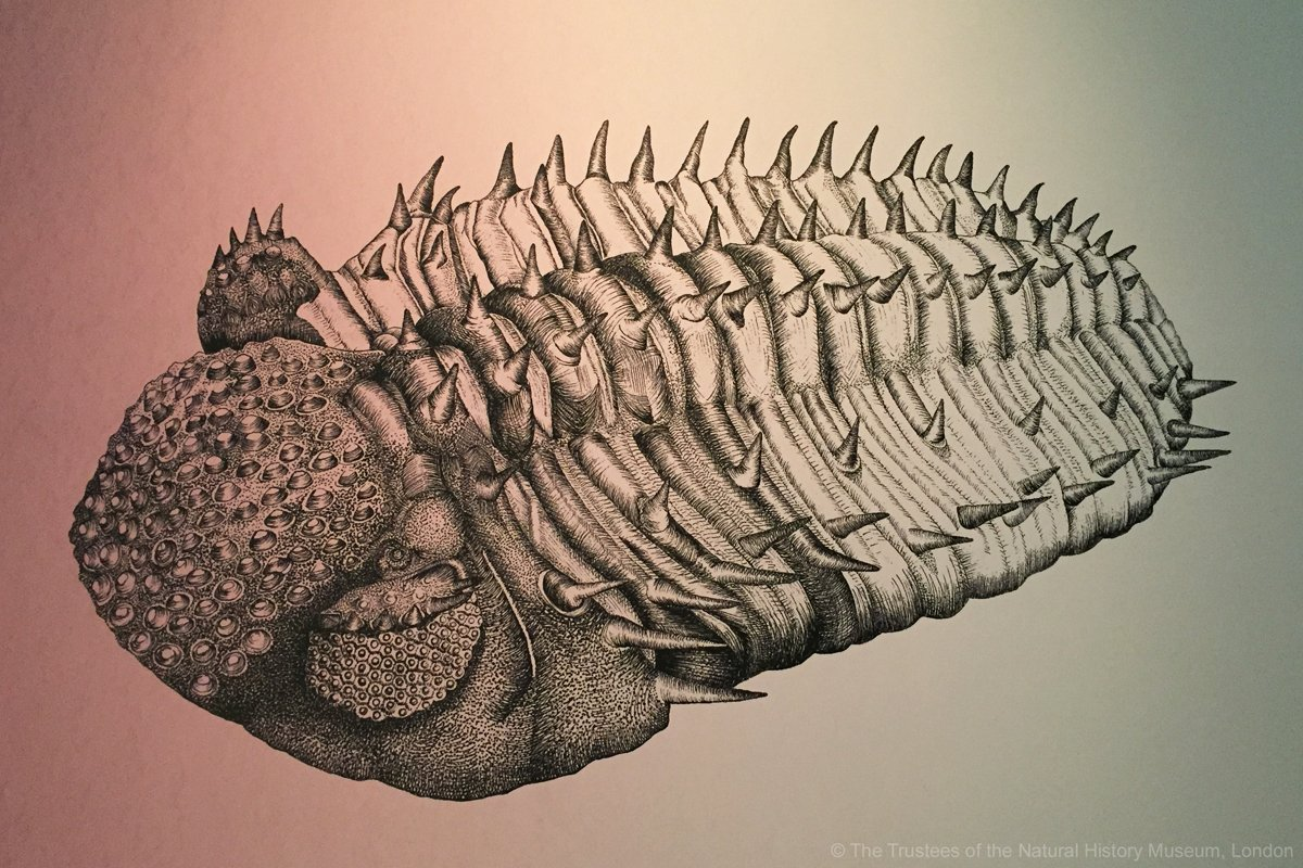 Drotops megalomanicus features as an exemplar of early eyes in our #ColourAndVision exhibition #FossilFriday #SciArt