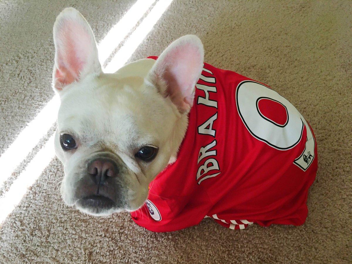 Manchester United On Twitter Happy Nationaldogday