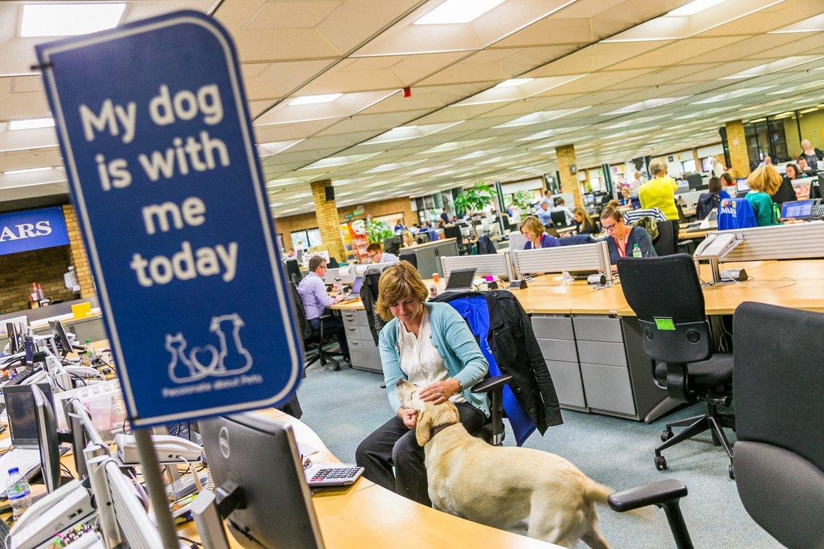 Dog Friendly Workplaces Edinburgh