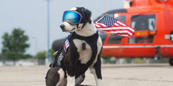 Traverse City airport dog, Piper, is coolest dog in MichiganNationalDogDay