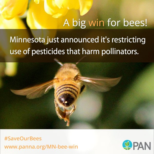 Big news for bees in MN! New rules tackle neonic use in farm fields and on public lands: https://t.co/O1zVRIjRU9 https://t.co/5fIKJVxgCN