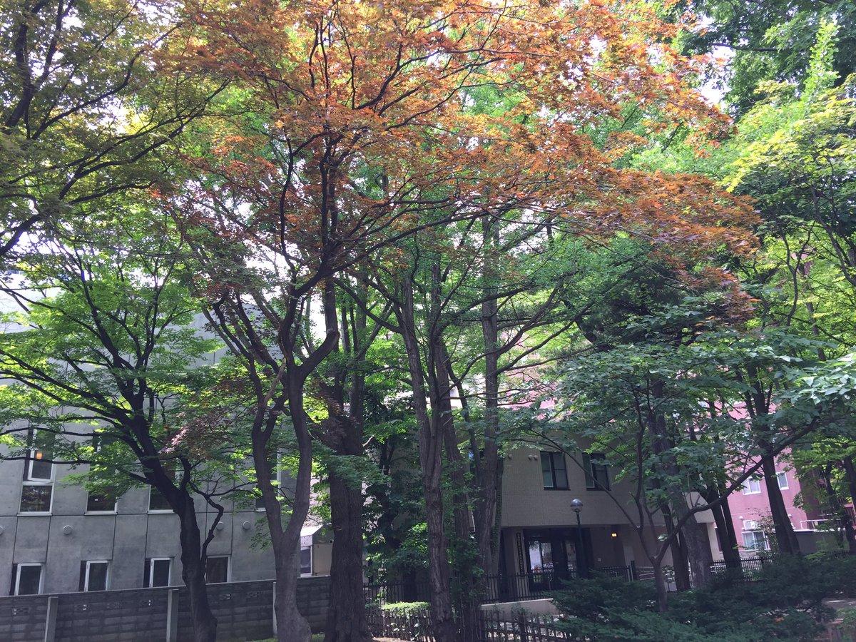 大学 偏差 値 北海道
