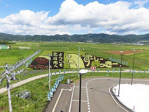 新函館北斗駅裏、今日のずーしーほっきー田んぼアート。意外にまだ持ち堪えていますが、そろそろ滅びの美学が観れそうな雰囲気でした。耽美派、ビジュアル系の皆様は