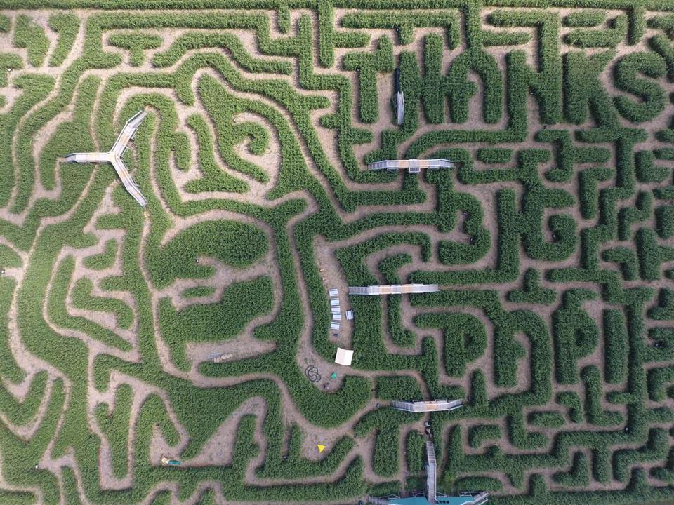 David Ortiz's face is carved in to a Sterling corn maze