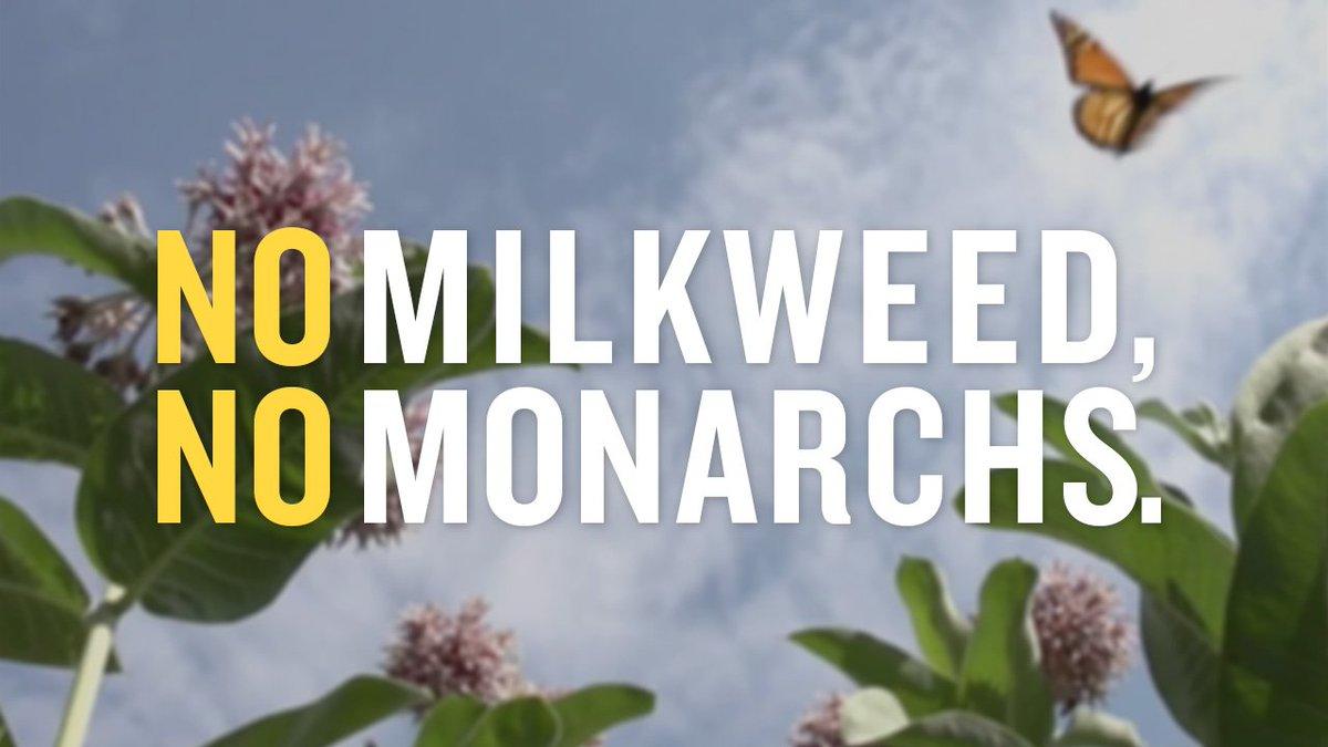 milkweed survival theme