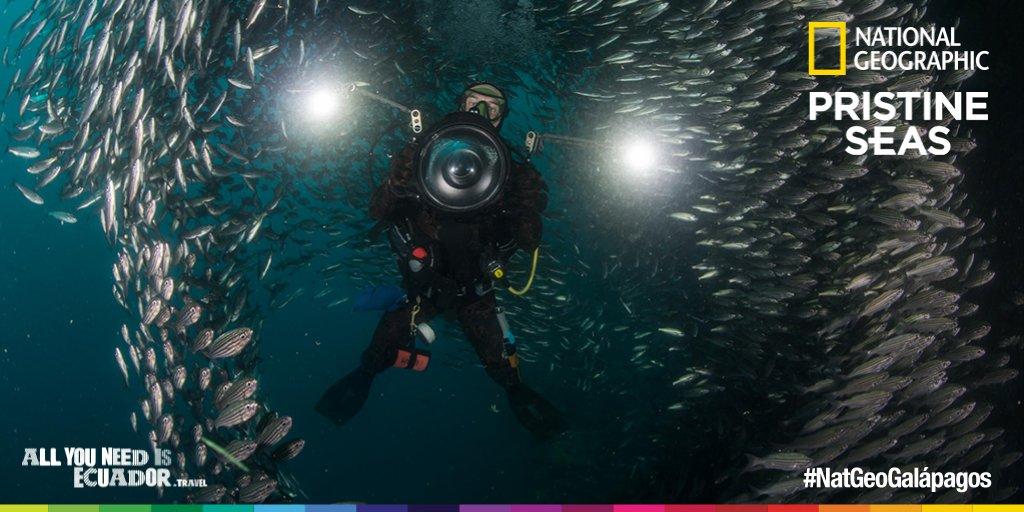 .@NatGeo utilizó equipos especiales de submarinismo para filmar hasta 400 metros de profundidad #NatGeoGalápagos