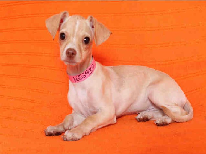 Meet this little girl today @KTLA 1p. Needs a home. @lacitypets @SarahGrooters @valeriegratias @glenwalkerktla https://t.co/pqxtYAwxKT