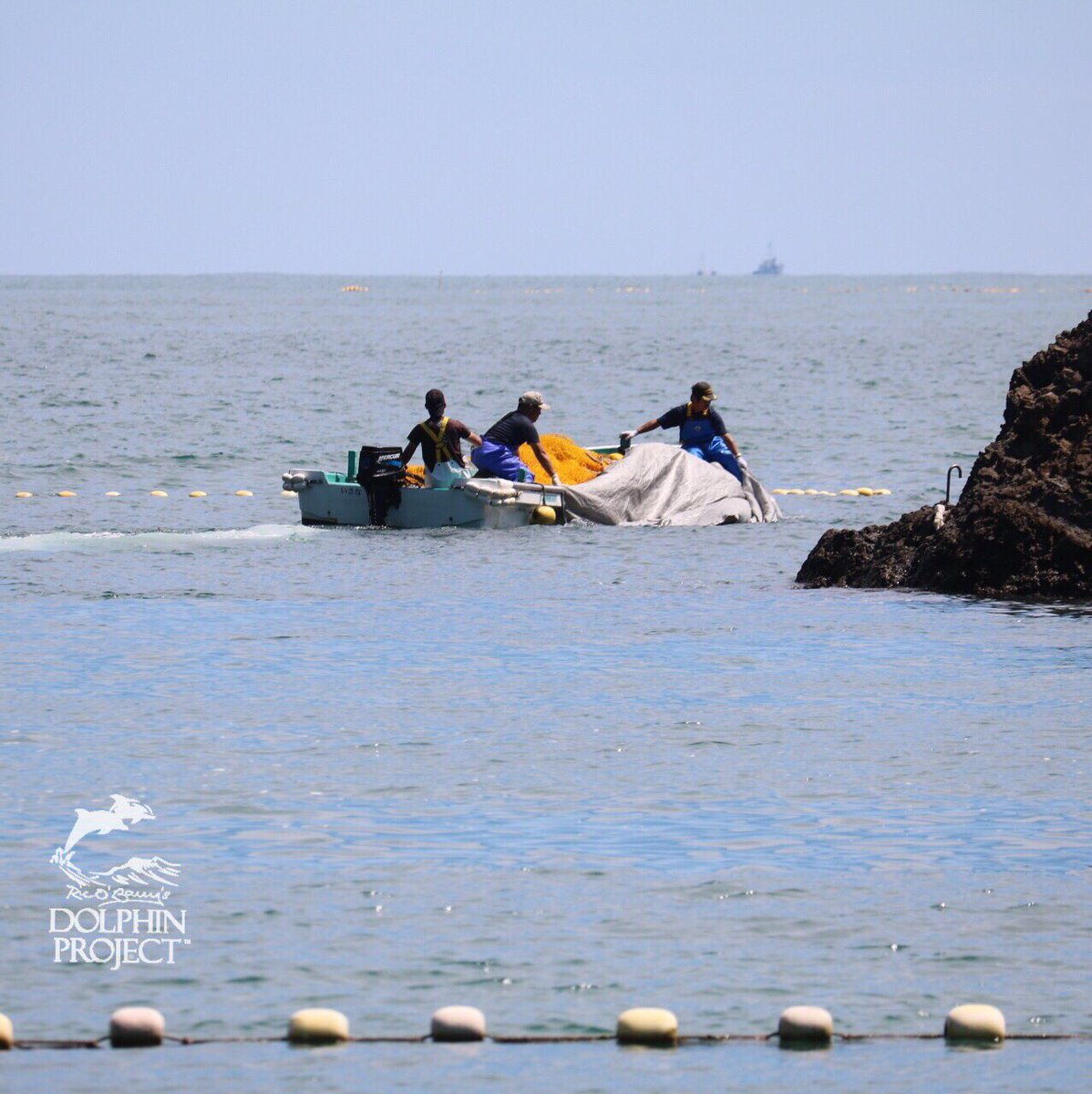 Fuck Japanese Whaling Dolphin Killing Traditions - Porn Galleries-4826