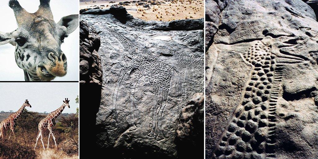 the worlds largest rock art petroglyph dabous giraffe - 1024×512