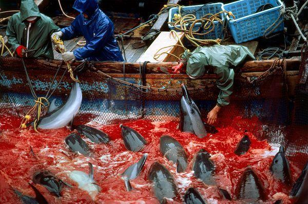 Did you know? 2 KILLING BAYS on #earth...