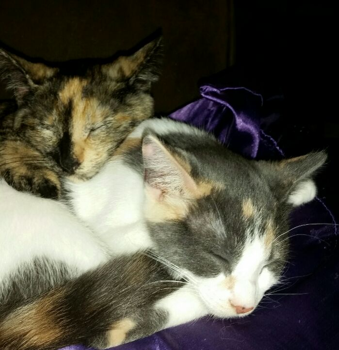 Snuggly kittens! https://t.co/fZdfmcTbpw