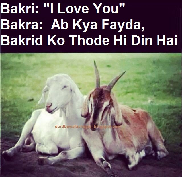 Dard bewafa shayari on twitter happy bakra eid mubarak wishes sms never miss a moment m4hsunfo