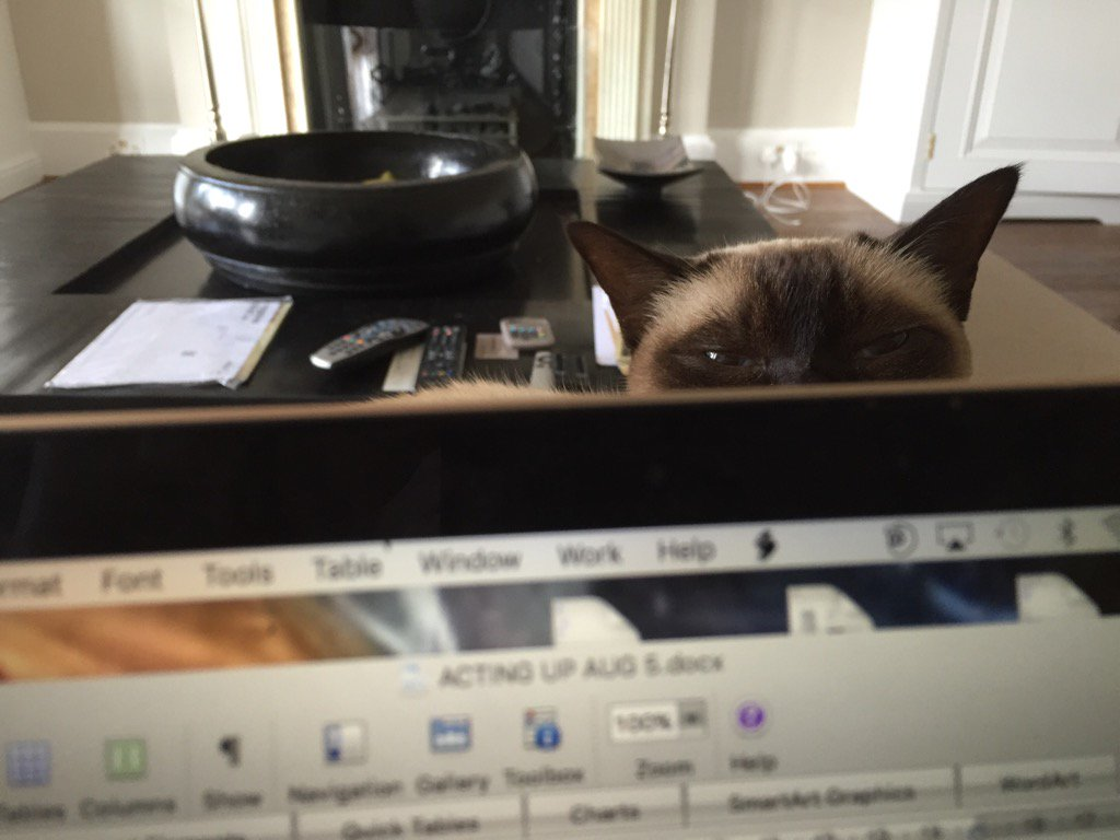 RT @JaneFallon: I'll be honest, this isn't the most convenient way to work. https://t.co/bwQpumyBGn