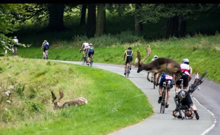 Oh Deer! Triathletes taken out by Deer at Dublin City Triathlon…. https://t.co/7A9tFNQAdV