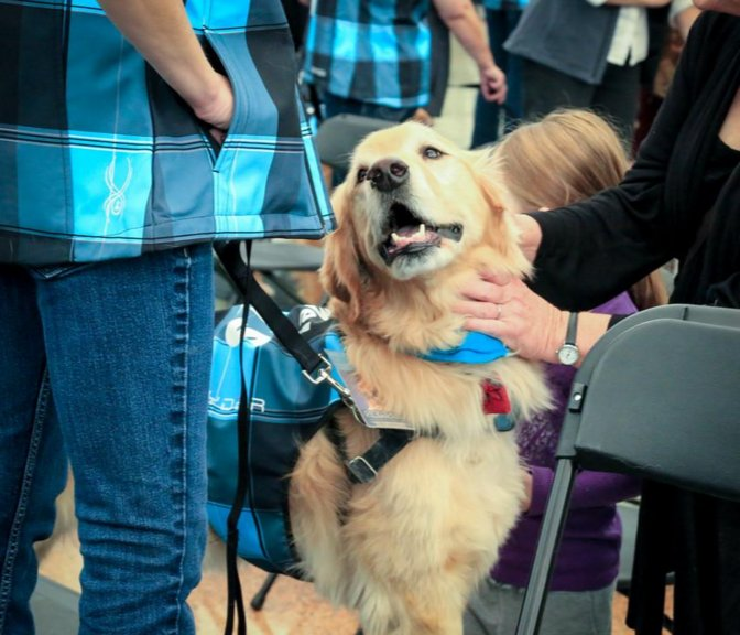 Apparently, we loved the furballs so much, @DENAirport is adding even more of them!